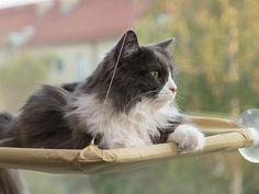 Katteseng Til Vindue - Lad katten ligge og hygge på vinduet!