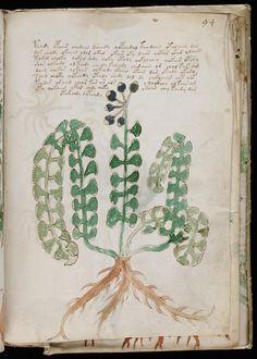 Voynich - MYSTERIOUS MANUSCRIPT of the 15t century