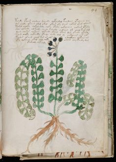 Voynich - MYSTERIOUS MANUSCRIPT of the 15t century