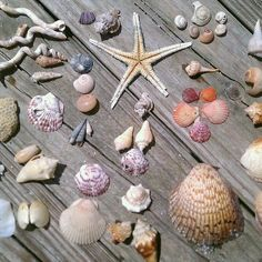 Kim & I can attest to this - Captiva Island - Best beach shelling ever. Places In Florida, Captiva Island, Shell Beach, Marco Island, Cape Coral, Shell Crafts, Finding Joy, Beautiful Beaches, Sea Glass