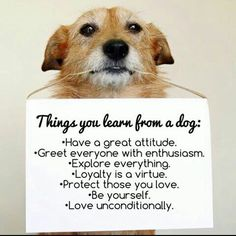 Pet lovers - Things you learn from a dog