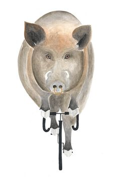 """Wildschwein auf Fahrrad"" auf RIDING RHINO  #Wildschwein #wildhog #illustration #fahrrad #animal #Tier #bicycle #design #veganism #cyclism #minimalism #Dattel #Geschmack"