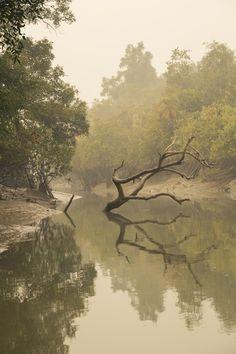 Sundarbans 作者 Philippe Tarbouriech