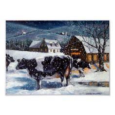 Cows in the snow - so calm