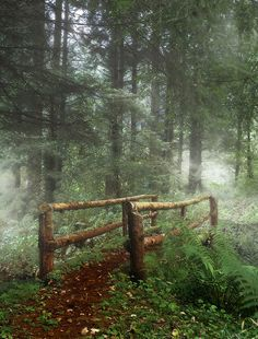 Path in the Mystical Forest, Ireland
