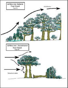 Windbreak trees nebraska figure 1 cross section of a for Garden windbreak designs