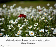 """Charles Baudelaire """"L'air est plein du frisson des choses qui s'enfuient"""""""
