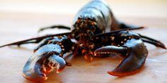 Én hummer - middag til fire / One lobster, dinner for four.