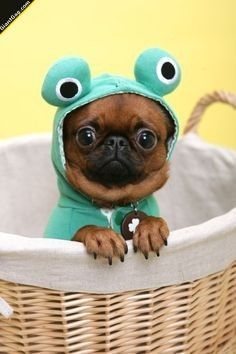 #Cute #Puppy In Frog Costume | Click the link to view full image and description : )