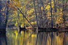 Rantapenkka - I - vesi joki tyyni pinta joenpenkka ranta heijastus syksy syksyinen keltaiset lehdet ruska Fiskarsinjoki Fiskarinjoki Fiskars