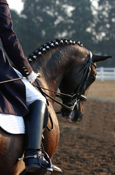 Dressage horses also ride in curbs