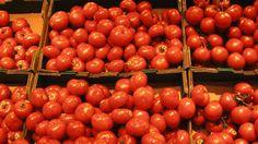 Cómo plantar tomates en casa