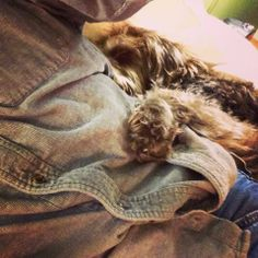 Gander: Service Dog  That moment when you really have to go but every time you start to move your dog hugs you a little tighter. #dogs  #theyrescueus  #rescuedogs