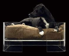 Clear dog bed