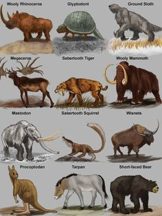 Cats and kittens prehistoric mammals, mamals animals mammals, mammals activities for kids free pr Prehistoric World, Prehistoric Creatures, Fantasy Creatures, Mythical Creatures, Weird Mammals, Jurassic, Dinosaur Art, Extinct Animals, Animal Illustrations