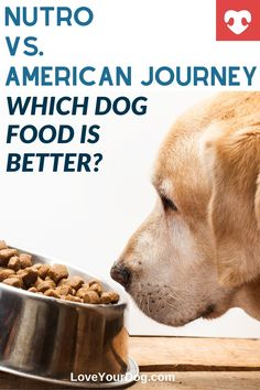 Thinking American Journey or Nutro might be the next dog food for your pup? We compare brands, food ingredients, recall histories and more! #loveyourdog #dogfood #americanjourneydogfood #nutrodogfood #dogfoodreviews #comparingdogfood #doghealth Nutro Dog Food, Dog Food Reviews, Grain Free Dog Food, Best Puppies, R Dogs, Healthy Choices, Your Dog, Good Food, Journey