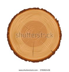 Tree rings, tree trunk rings isolated, wood ring texture, tree rings vector…