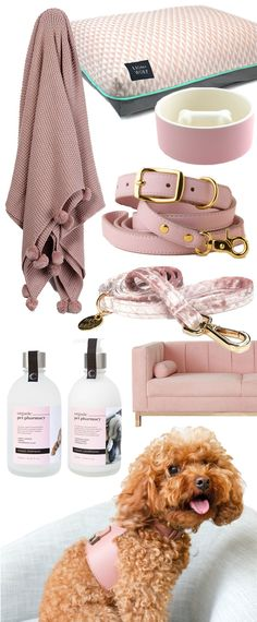 Our favourite blush dog accessories right now - blush dog collars, blush dog beds and more all in the perfect shade of pink!