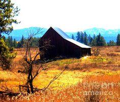 """Golden Autumn""  Photography by Maureen Marie Sundstrom"