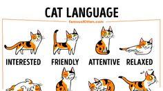 CAT LANGUAGE http://ift.tt/2y9kOO6