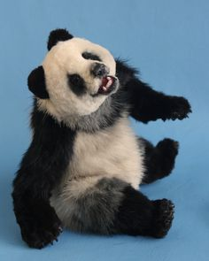 *SHI QUAN ~ Vintage recycled mink fur realistic panda bear, by: Melisa's Bears