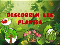 Descobrim  les plantes by cpespillari via slideshare