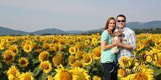 Photography by Distinction Studio Sunflower photograph #sunflower #sunflowerphotos #sunflowerphotography #spokanephotographer #spokanephotography #Spokane #Sunflowerphotosession