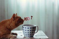 кот :) by Toma Evsukova on 500px