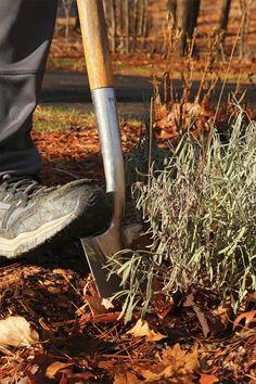 Master the Art of Transplanting - FineGardening Garden Show, Garden Art, Garden Tools, Water Movement, Spring Flowering Bulbs, New Roots, Soil Layers, Art Articles, Propagating Succulents
