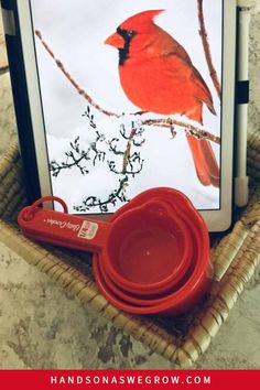Using things you have at home you can create a super fun, low-prep animal winter scavenger hunt activity. Work of letter sounds, teach colors and engage gross motor skills in your kids. #indoorkidsactivities #winterkidsactivities