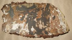 MH370 search: New debris in Madagascar includes 'burnt parts'