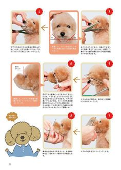 Is a Muzzle Right For Your Dog? Advice For Pet Grooming Dog Grooming Styles, Dog Grooming Shop, Dog Grooming Salons, Poodle Grooming, Dog Grooming Business, Pet Shop, Havanese Grooming, Puppy Care, Dog Care