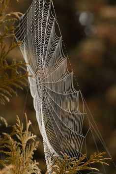 Spider webs are magickal and very beautiful