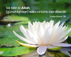 Ve bilin ki Allah, (günahlardan) sakınanlarla beraberdir. [Tevbe sûresi,36] #Allah #ayetler #tövbe #günah #ayet #islam #türkiye #ilmisuffa