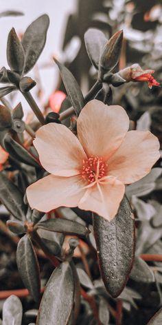 Flowers, Plants, Color, Colour, Plant, Royal Icing Flowers, Flower, Florals, Floral