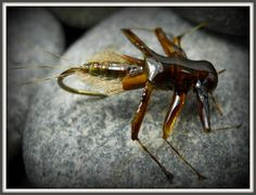 Mayfly, Fly Tying, Trout, Fly Fishing, Blog, Montages, Animals, Change, Fishing