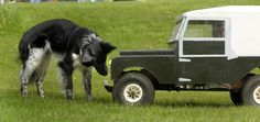 The Heritage Land Rover Weekend in May 2008 marking the model's 60th anniversary was held at the Heritage Motor Centre in Gaydon, Warwickshire. Woody, a border collie owned by Alli Sherwood, checks out a radio-controlled model of a 1956 Series One Land Rover made by James Ferguson from Birmingham