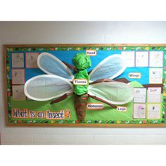 My Insect bulletin board for my Kinders.