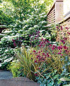 Shade-loving ferns and hostas lend texture to garden design. {PHOTO: Virginia Macdonald}