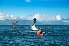 Adventure Travel Trade Association's AdventureWeek kicks off in September with AdventureWeek Chile Punta Arenas Chile, Patagonia, Overseas Adventure Travel, Adventure Activities, Travel Images, Fauna, Kayaking, Tour, Traveling By Yourself
