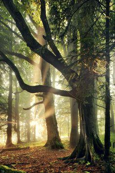 "thevoyaging: ""Sun Rays, Sumava National Park, Czech Republic photo via caitlin """