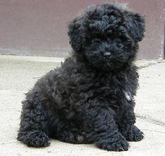 Cachorro completamente negro