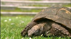 Turtles and Tortoises - Nature Documentary  In honor of World Turtle day