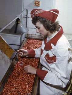 A factory worker sorts cranberries by color in 1942.