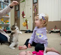 A three legged cat and a toddler with cancer discover their similar challenges and become best friends.