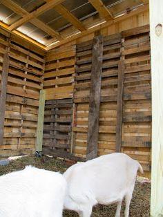 It's a Boy's Life: The Goat's Pallet Barn