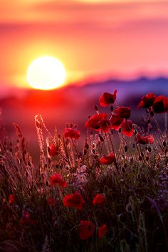 Beautiful sunrise this morning! I love sunrise and sunsets Beautiful World, Beautiful Images, Beautiful Flowers, Landscape Photography, Nature Photography, Sunrise Photography, Beautiful Sunrise, Jolie Photo, Amazing Nature