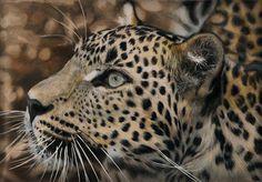 'Sri Lankan Leopard', by Anne Miekes, Prismacolor premier pencils on drafting film