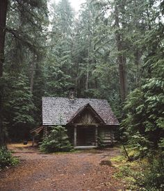 Today's cabin is in a beautiful forest More