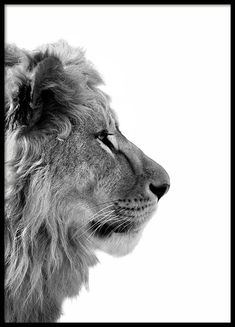 Lion From Side Affiche Photo Pop Art, Lion Profile, Poster 40x50, Poster Photo, Mode Poster, Groups Poster, Poster Sizes, Elephant Poster, Poster Store